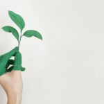 CaixaBank y Fundación Bancaja convocan ayudas por 150.000 euros para proyectos medioambientales en la Comunitat Valenciana